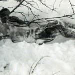 Новые останки на перевале Дятлова исследуют эксперты