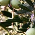 Израильская диета — самая здоровая в мире