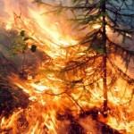 Наблюдатели — в настоящий момент горит пол Сибири, дым уже в поволжье (фото)