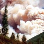 В Сибири горит миллион гектаров леса. Пожары никто не тушит — денег нет.