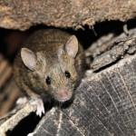 Первую в Испании да и во всей Европе «перепись» крыс провели в городе Барселоне