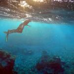 Израильские исследователи восстанавливают коралловые рифы с помощью 3D-печати