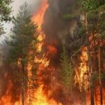 На РФ выросла площадь лесных пожаров