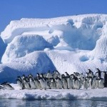 Семь стран будут делить Антарктиду через 30 лет