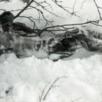 Перед гибелью туристов на перевале Дятлова была драка c неизвестными