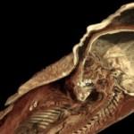 Существо, найденное возле древнейшей пирамиды, оказалось не совсем человеком — археологи