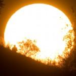 Глобальное потепление скоро убьет все живое в экваториальной зоне — ученые