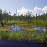 Ученые заявили о необратимых изменениях экосистемы Европы