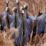 Птицы создают многоуровневое общество несмотря на крошечный мозг — ученые