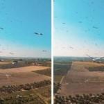 Дрон пролетел сквозь стаю аистов (видео)